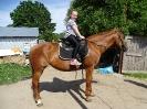 Дети на лошадях 3