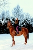Лошади зимой_2