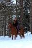 Лошади зимой_7