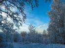 Лошади зимой_8