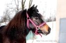 Лошади зимой_9