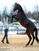 Праздники на лошадях - Масленица_21
