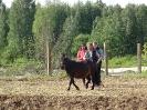 Спортивный конный лагерь_1