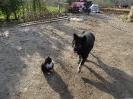 Фотосессии с животными_1