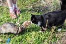 Фотосессии с животными_23