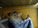 Фотосессии с животными_24