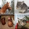 Фотосессии с животными_7