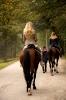 Конные прогулки в Шуваловском парке_21