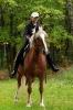Конные прогулки в Шуваловском парке_2