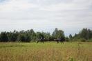 Конные прогулки в Шуваловском парке_4