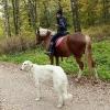 Конные прогулки в Шуваловском парке_5